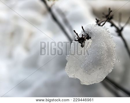 A Lump Of Snow Instinctively Percolated Over A Thin Branch Of A Bush Against The Background Of A Win