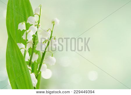 Lilly Of The Valley Flowers And Leaves Ob Blue Bokeh Background Banner