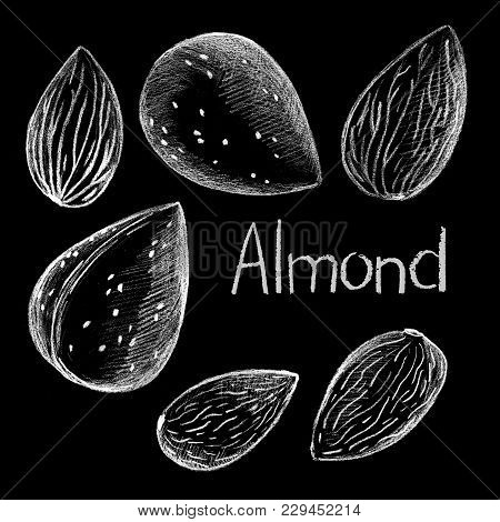 Almond Nut By White Chalk On Black Background. Almond Nut Clean And In Shell Hand-drawn Illustration