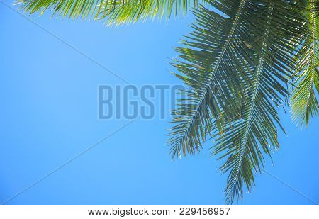 Palm Branch And Blue Sky. Green Tropical Leaf On Blue Background. Coco Palm Tree On Sky. Green Palm