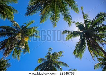Tropical Landscape With Palm Trees. Palm Tree Crowns With Green Leaves On Sunny Sky Background. Coco
