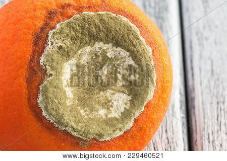Mandarin With Mould On White Wooden Boards
