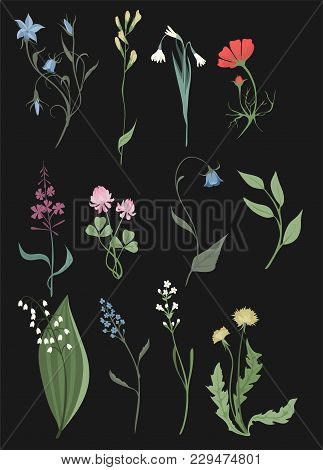 Herbs And Wild Flowers Vector Clip Art Set Of Botany Illustrations Vintage Flowes Images