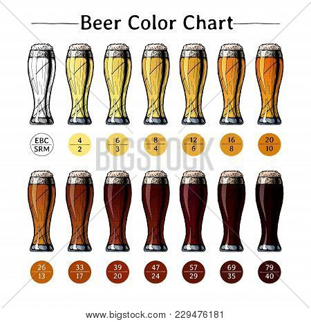 Vector Hand Drawn Illustration Of Beer Color Chart. Infographic Of Color Based On Standard Reference
