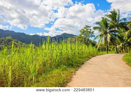 Tropical Landscape With Palm Trees And Village Road. Countryside Road In Green Tropical Forest. Empt