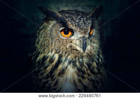 Owl Close Up At Night. Bird Of Prey Portrait. Wild Animal.