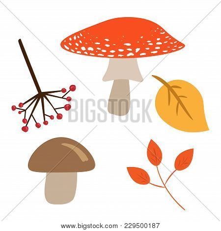 Autumn Leaves, Mushrooms And Berries Isolated On White Background. Vector Image Of Red And Brown Mus