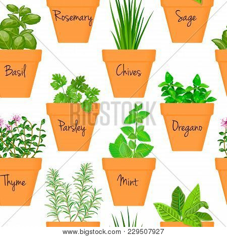Big Icon Seamless Pattern Vector Set Of Culinary Herbs In Orange Terracotta Clay Pots With Labels. G