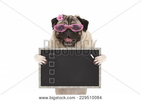Cute Female Pug Dog Puppy Holding Up Blank Checklist On Blackboard With Check Boxes Drawn With Chalk