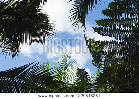 Palm Tree Leaf On Blue Sky Background. Coco Palm Tree Top Silhouette On Sky. Green Palm Leaf On Sunn