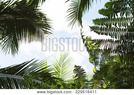 Bright Tropical Leaf On Sky Background. Coco Palm Tree Top Silhouette On Sky. Green Palm Leaf On Sun