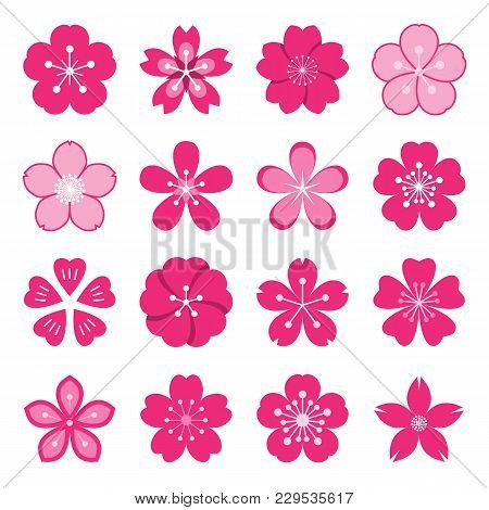 Sakura Icons. Collection Of 16 Colored Ume Japanese Cherry Blossom Symbols Isolated On A White Backg