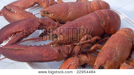 Assortment of cooked lobster on a plate poster
