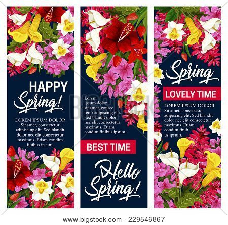 Hello Spring Floral Banner For Springtime Season Holiday. White, Pink And Yellow Flower Of Daffodil,