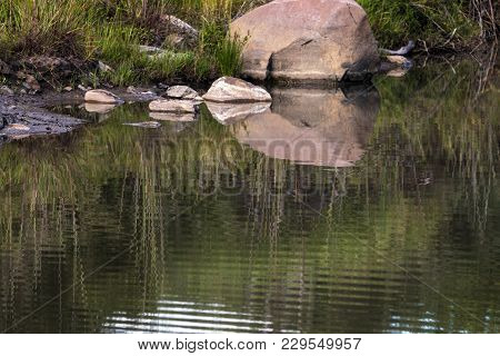 Abstract  Patterns Reflections On Wild Animal Watering Hole