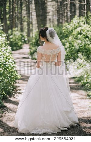 The Bride In An Elegant Wedding Dress With Lace And Veil Stands On A Path In A Summer Forest