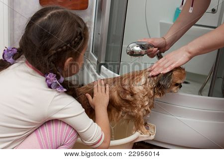 The Girl Helps To Wash A Dog