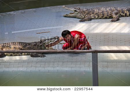 Crocodile Show at Sriracha Tiger Zoo, Thailand