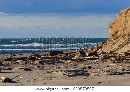 Pacific Nothwest Beach With Driftwood Waves And Cliffs
