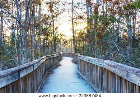 Boardwalks in the swamp in Everglades National Park, Florida, USA.