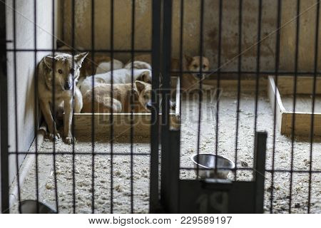 Stray Animals In A Cage At The Shelter For Homeless Animals
