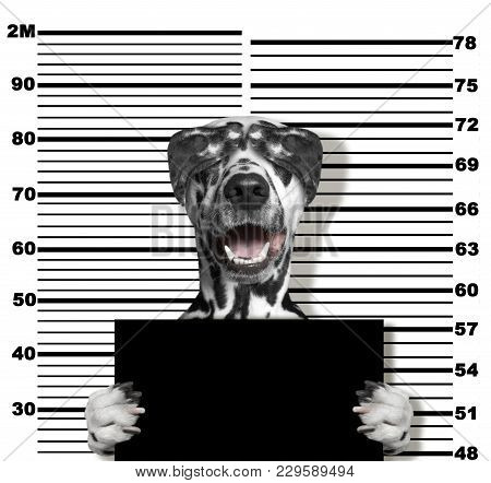 Cute Dalmatian Dog At The Police Station. Photo On White Background