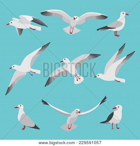 Set Illustrations Of Atlantic Seagulls In Cartoon Style. Pictures Of Birds In Different Poses. Seagu
