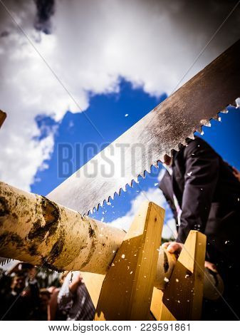 Closeup Of A Birch Tree Log Being Sawn By Someone Dressed In A Suit And Dress Shirt With A Hacksaw I