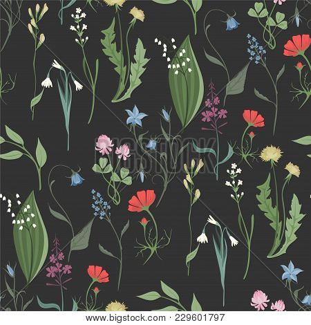 Herbs And Wild Flowers Vector Seamless Pattern Of Botany Texture Bdckground Illustrations Vintage Fl