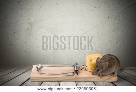Mouse Cheese Trap Close Up Background Nobody Isolated