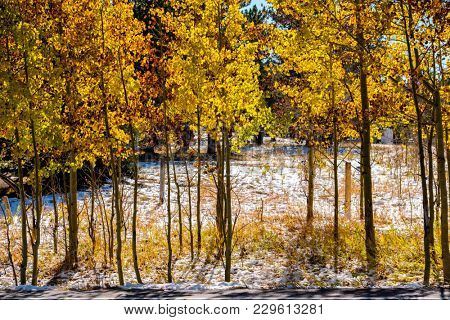 Season changing, first snow and autumn aspen trees in Colorado, USA.