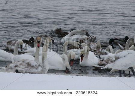 Vivid Birds Bazar In Cold Winter Day Help Feeding Birds In Frozen Days