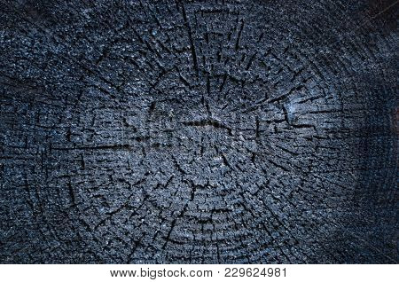 Burned Log Texture. The End Of The Sawn Logs Is Charred