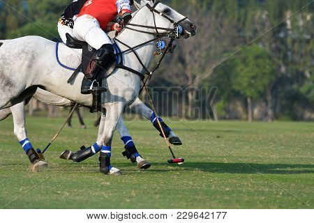 Horse Polo Players Are Competing In The Field.