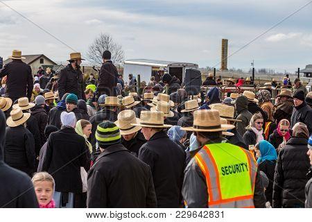 Amish At Community Mud Sale