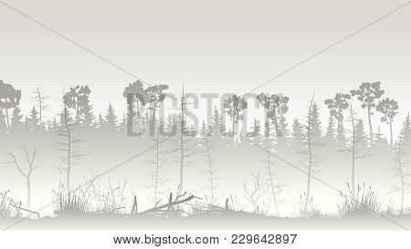Horizontal Illustration Misty Coniferous Forest With Grass On Edge Of Swamp.