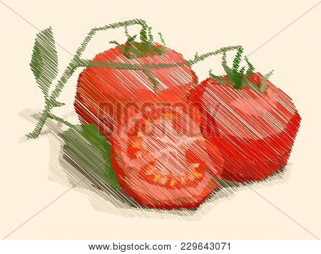 Vector Illustration Graphic Arts Sketch Of Drawing Fruit Tomatoes With Half.