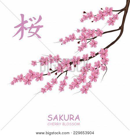 Blossom Cherry Tree. Traditional Japanese Sakura. Cherry Blossom. Pink Sakura Flowers. (chinese Tran