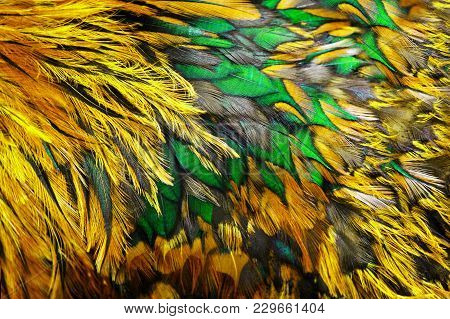 Bright Colorful Feathers Of Bird Close Up