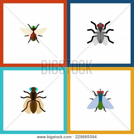 Icon Flat Fly Set Of Mosquito, Buzz, Dung And Other Vector Objects. Also Includes Fly, Gnat, Hum Ele