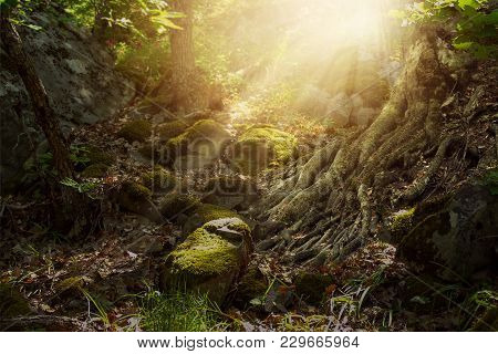 Fantasy Elf Forest With Rocky Trail And Mighty Tree Roots, Mystic And Dreamy Mood