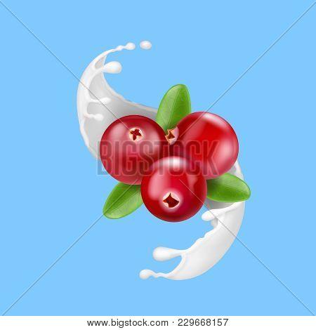 Red Cranberry In Milk Splash. Yogurt Splash With Berries Isolated On Blue Background. Advertising Te