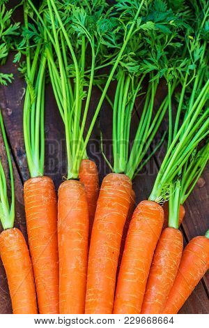 Raw Carrots  On Rdark Wooden Background. Close Up. A Bunch Of Carrots