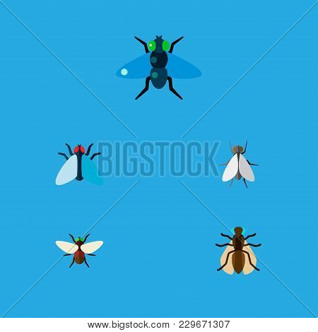 Icon Flat Fly Set Of Gnat, Tiny, Dung And Other  Objects. Also Includes Fly, Bluebottle, Hum Element