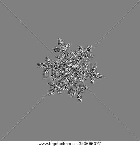 Snowflake Isolated On Uniform Gray  Background. Macro Photo Of Real Snow Crystal: Large Stellar Dend