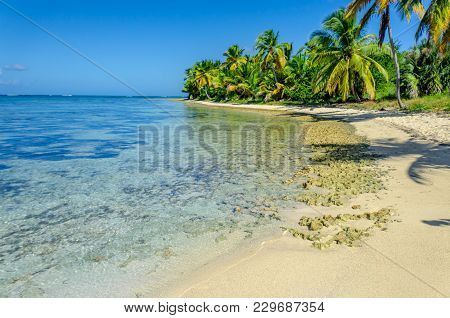 Tropical Beach With Transparent Ocean Water, Palm Grove, Stones, People Walking Along The Shore And