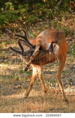An amuzing deer image