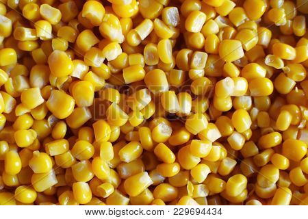 Bulk Of Yellow Canned Corn Grains As Background. Horizontal Top View Image.