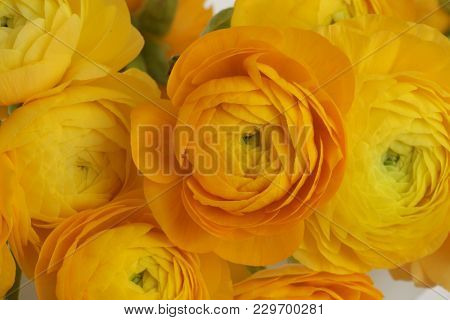 Yellow anemone flower bouquet background