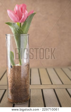 Closeup Grouping Of Pink And Purple Tulips In A Glass Vases On A Wood Table